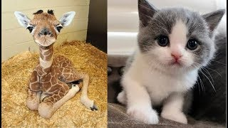 Cute Baby Animals Videos Compilation Cute Moment Of The Animals - Soo Cute! #23