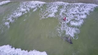 Panama City Beach - Massive Hammerhead Shark - In the Surf!