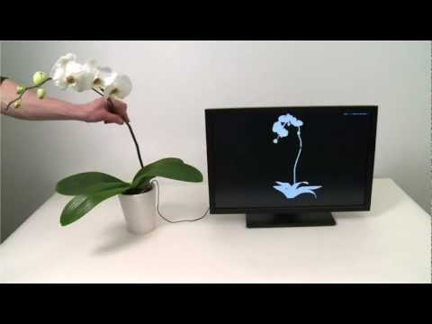 """Botanicus Interacticus"": Interactive Plant Technology"