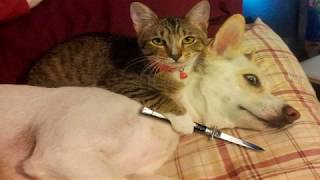 Top Funny Cats and Kittens Playing compilation