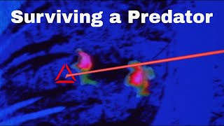 4 Ways to Try To Escape The Predator's Heat Vision!