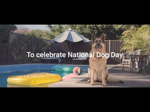 RSPCA National Dog Day!
