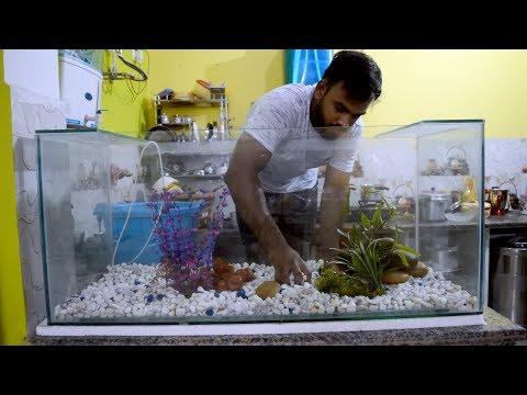 Aggressive Aquarium Fish For Sale At Aqua Pet Center Kurla
