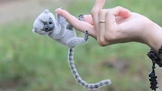 15 Smallest Animals In The World