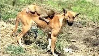 Chó mẹ nhận khỉ con mồ côi về nuôi và hành động sau đó khiến cộng mạng rơi nước mắt!!!