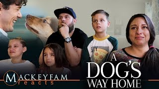 A DOG'S WAY HOME - Official Trailer- REACTION and REVIEW!!!