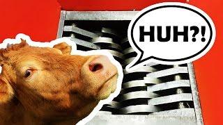 EXPERIMENT Shredder vs COW TONGUE + ASMR EATING SOUNDS NO TALKING