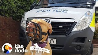 Police Take Guy's Dog Just Because She's A Pit Bull  | The Dodo Pittie Nation