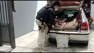 PRF apreende quase meia tonelada de camarão transportado sem refrigeração em Rio Grande