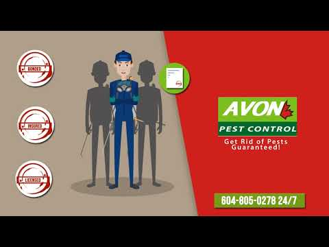 Pest Control and Bed Bug Exterminator in Vancouver BC 604-805-0278