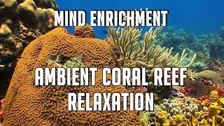 Stunning Mind Enrichment Ambient Coral Reef  Relaxation  Music - Sleep Meditation Stress Relief