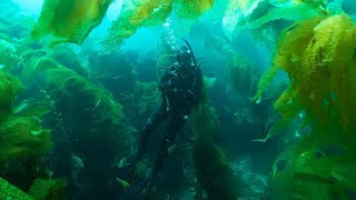 Exploring the world's most famous kelp forests (Catalina diving)