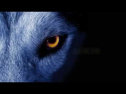 Baixar David Guetta ft. Sia - She Wolf Instrumental *