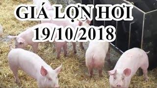 Giá lợn hơi hôm nay 19/10/2018 | Giá lợn hơi mới nhất