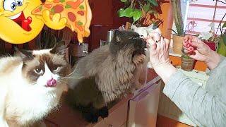😸🤡 THREE CRAZY CATS  - Feeding of the predators 🐯 🦁