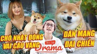 Tranh cãi dùng chó Nhật đóng vai Cậu Vàng: Dân mạng đại chiến - Hít Hà Drama