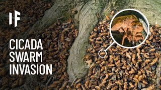 What If You Were Attacked by a Swarm of Cicadas?