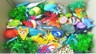 Learn Sea Creatures for Kids Wild Zoo Animals Names Education Video