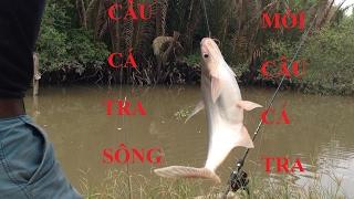 CÂU CÁ TRA VÀ MỒI CÂU CÁ TRA | HUYNH KHOA FISHING