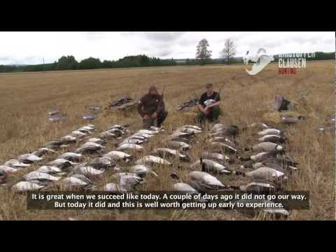 Kristoffer Clausen Hunting TV, Episode3, Hunting pigeons and geese, Actionpacked!