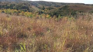 Mesmerizing and Magical Fall Grasses in the Badlands  North Dakota  September 11, 2018