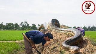 Đào hang bắt rắn  Rắn hổ mang gây bão ở Bình Xuân  Săn Bắt TV