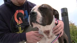 A Virginia Beach Pit Bull Is Being Called A Hero