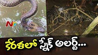 Kerala Govt issues Snake Alert..