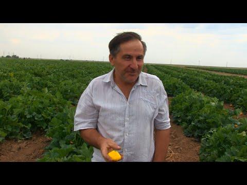 На полях главы КФХ Ахмедова стартовала уборка урожая