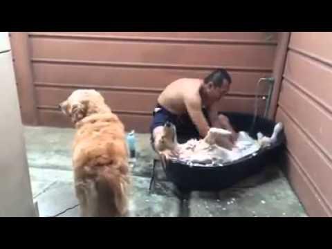 Куче ужива во капењето како да е во СПА центар
