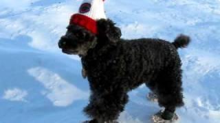 Un chien en raquettes à neige