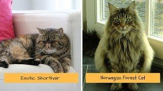 15 Most Bizarre Cat Breeds Ever