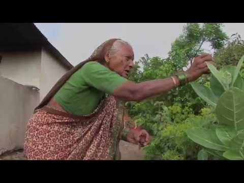 Farmers Speak: Iron Pearl Millet, India