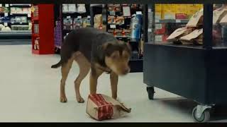 A Dog's Way Home | Bella steals Chicken At a Food Mart Scene | (HD)