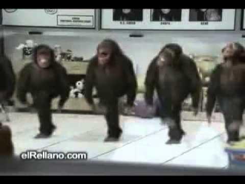 happy birthday funny monkey - photo #29