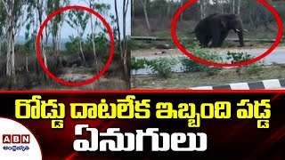 Herd of elephants struggle to cross highway in AP..