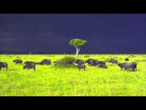 Radion 6 - The Serengeti (Original Mix) HQ