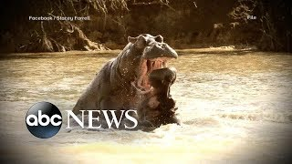 American tourist recovering after hippo attack