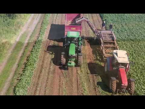 Harvesting Mash Direct next to Strangford Lough - Drone Footage