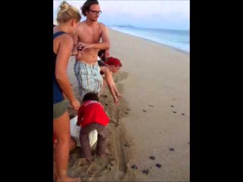 Turtle Release at Las Playitas Beach near Todos Santos, Baja California Sur