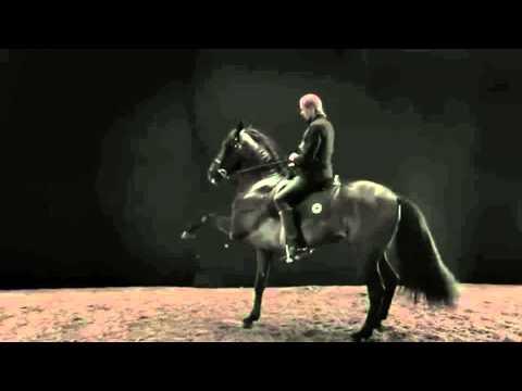 bangarang horses