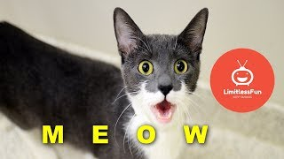 Funny Kittens and Cats Meowing 😸 New Compilation (2019) 😻