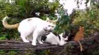 かご猫45