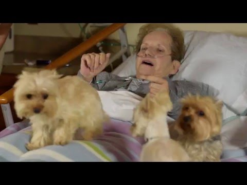"""""""A Program for the Love of Pets"""" is a video available on the Moments of Life: Made Possible by Hospice website that shares the story of the care Pet Peace of Mind provided to Sharon's beloved Yorkshire Terriers, Shelby and Yogi."""