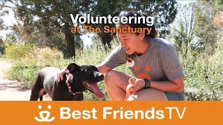 Best Friends TV Episode 18: Volunteering at the Sanctuary