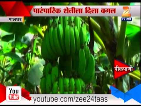 केळी आणि पपईच्या उत्पादनात फायदा