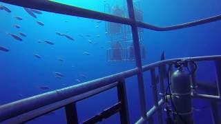 ホオジロザメの罠