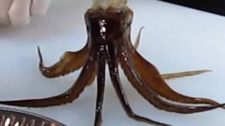 Chef Cooks Squid ALIVE!!!! **GRAPHIC**