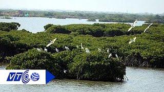 Khám phá rừng ngập mặn nơi đất mũi Cà Mau   VTC