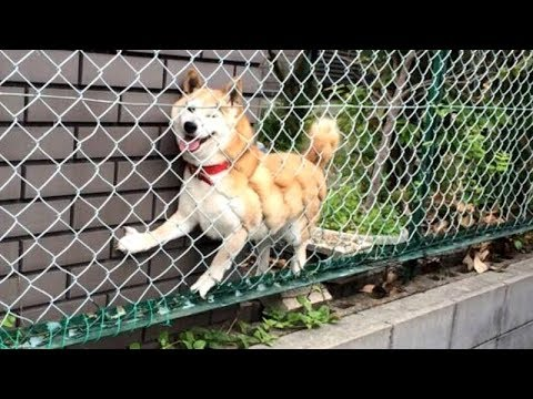 NOT THE SMARTEST DOGS doing DUMB THINGS - LAUGH at FUNNY DOGS compilation